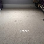 Cranberry Juice Stain Removal Evanston A