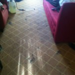 Evanston-Carpet-Clean-before