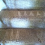 Evanston-Stairs-Carpet-Cleaning