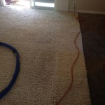 Evanston-Traffic-Area-carpet-cleaners