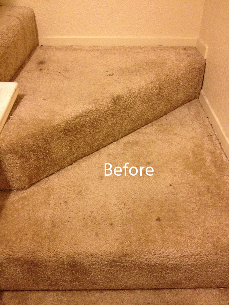 Carpet Cleaning Evanston Carpet Cleaning Evanston 224